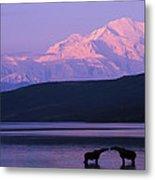 Two Moose Kiss In Wonder Lake Metal Print