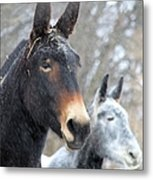 Two Mules For Sister Sara Metal Print