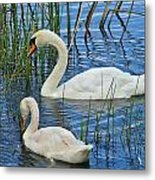 Two Mute Swans Metal Print