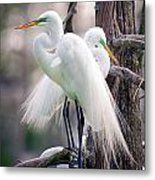 Two Of A Kind Metal Print by Tammy Smith