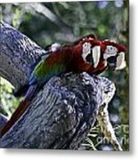 Two On A Branch Metal Print