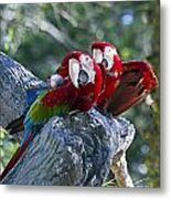 Two On A Branch Two Metal Print