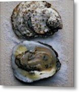 Two Oysters Metal Print