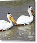 Two Pelicans Metal Print