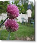 Two Pink Chives Metal Print