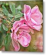 Two Pink Roses I  Blank Greeting Card Metal Print