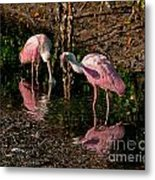 Two Pink Spoonbills Metal Print
