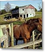 Two Quarter Horses In A Barnyard Metal Print