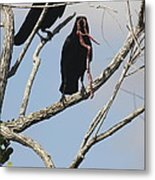 Two Raven With A Snake Metal Print
