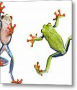 Two Red Eyed Tree Frogs Metal Print