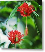 Two Red Hibiscus Metal Print