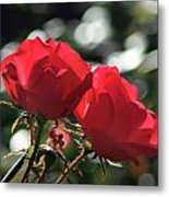 Two Red Roses Metal Print
