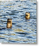 Two River Otters Metal Print