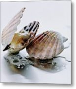 Two Scallops Metal Print