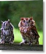 Two Screech Owls Metal Print