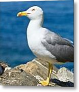 Two Seagull Metal Print