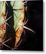 Two Shades Of Cactus Metal Print