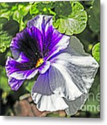 Two Shades Of Color Metal Print
