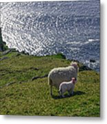 Two Sheep On The Cliffs At Sleive League - Donegal Ireland Metal Print