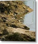 Two Spotted Sandpipers On The Flint Rivers Banks Metal Print