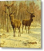 Two Stags In A Clearing In Winter Metal Print