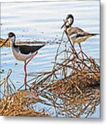 Two Stilts At The Pond Metal Print