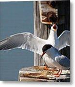 Two Terns Metal Print by Diane Rada