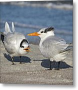 Two Terns Talking Metal Print
