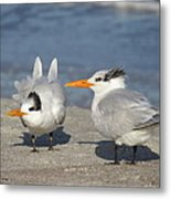 Two Terns Watching Metal Print