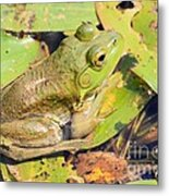 Two Toned Frog Metal Print