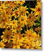 Two Toned Yellow Blooms Metal Print