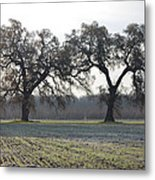 Two Tree Frosty Morning Metal Print