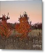Two Trees At Sunset Metal Print