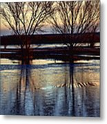 Two Trees In The Bosque Metal Print