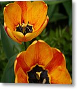 Two Tulips Metal Print