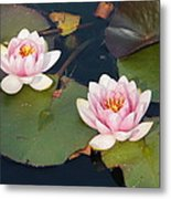 Two Water Lillies Metal Print