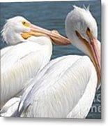 Two White Pelicans Metal Print