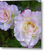 Two White Roses Border Metal Print