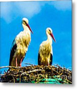 Two White Storks 16 Metal Print