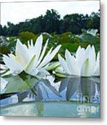 Two White Waterlilies Metal Print