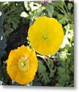 Two Yellow Flowers Metal Print