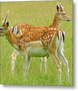 Two Young Deer Metal Print by DerekTXFactor Creative