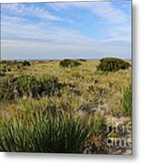 Tybee Island Dunes And Path Metal Print