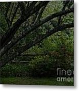 Tyler Tree 1 Metal Print