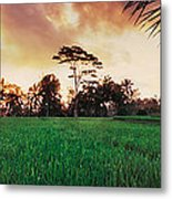 Ubud Rice Fields Metal Print