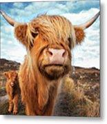 Uk, Scotland, Highland Cattle With Calf Metal Print
