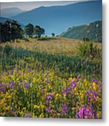 Umbria Wildflowers Metal Print