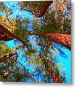 Under The Australian Pines Metal Print