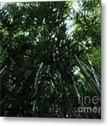 Under The Bamboo Haleakala National Park  Metal Print