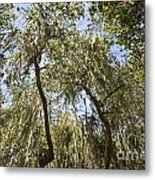 Under The Canopy - The Magical And Mysterious Trees Of The Los Osos Oak Reserve Metal Print